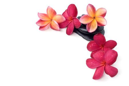Beautiful frangipani flowers with spa stone isolated white background