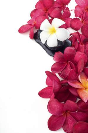 Witte frangipani bloemen op spa steen geïsoleerde witte achtergrond en rode bloemen frangipani