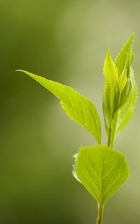 bole: Green leaves Stock Photo