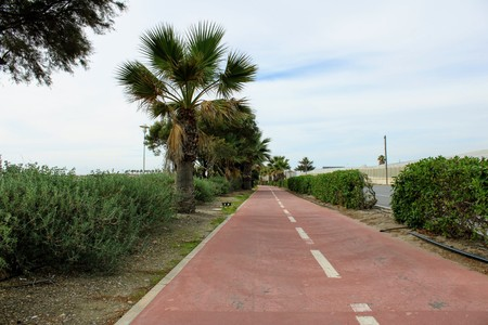 Bicycle track on the side of the road and palm trees