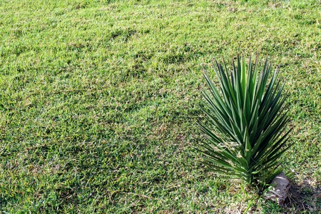 Natural grass and small palm tree in recreational park