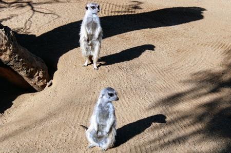 Wild animals in zoo of Almeria theme park Standard-Bild - 114697860