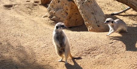 Wild animals in zoo of Almeria theme park Standard-Bild - 114697861