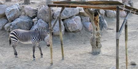 Wild animals in zoo of Almeria theme park Standard-Bild - 114697700