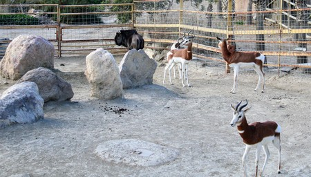 Wild animals in zoo of Almeria theme park Standard-Bild - 114697704
