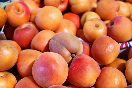 Rich and juicy apricot fruits with nice orange color