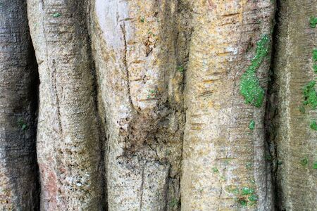 Image of big and old tree trunks wit moss
