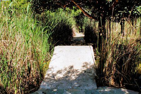 Path through tall grass in a natural site in Rumania Foto de archivo