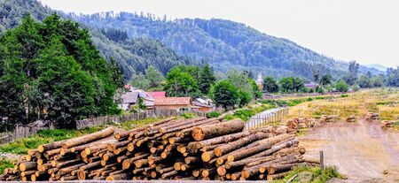 Carved and stacked tree trunks on the outskirts of town with mountain in the background