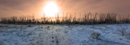 catastrophe: cleared forest winter ecological catastrophe of the globe