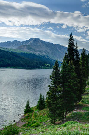 evergreen trees: Line of evergreen trees stands on the shoreline of a lake during the summer with mountains in the background
