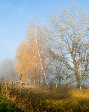 drenched: Sun-drenched meadow and misty gold trees - it is majestic autumn morning.