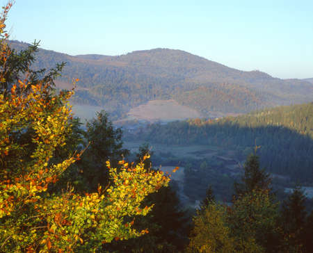 This is the Carpathian Mountains in autumn. Bright autumn tree is in the foreground,  ranges covered with forest- in the background. Stock Photo - 16018349