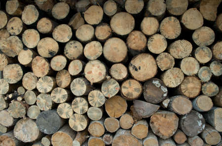 clamped: Trees have been cut down and clamped.  Sheared surfaces form the pattern.
