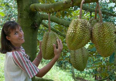 Young woman has hold of a durian in her hands  This is a durian plantation, Thailand  photo