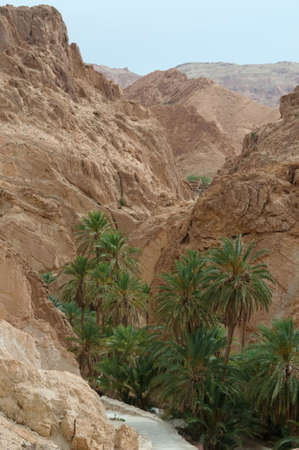 Mountain oasis Chebika is situated at the border of Sahara, Tunisia, Africa  Date-palms are  embosomed in Atlas Mountains  photo