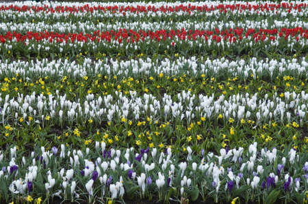 Different species of flowers growth on the field. This ornamental pattern contains red, yellow, white and violet colors. photo