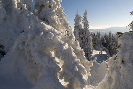 Thick hoar of frost is accumulated on fir-trees. Mountain ranges are in the background. Stock Photo - 16159179