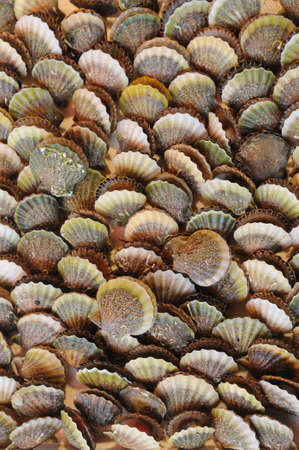 suggested: These are pattern of mussels. Such mussels are suggested as a souvenir in the seaside places.