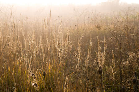 The sunlight shone down upon meadow. Grass is similar to a gold. Stock Photo - 16154617