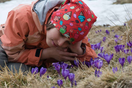 The girl is lost in contemplation of violet crocuses  Such flower meadow is characteristic for Carpathian Mountains in spring   photo