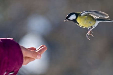 The tit is flying to one Stock Photo