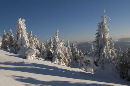 Frosty trees like to fairy-tale character  This is alcyon morning in Carpathian Mountains, Ukraine  photo