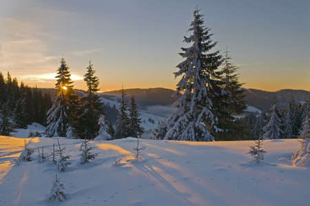 This is a sunset in barrow  Fir-trees covered with snow are looked golden in the slanting rays of the setting sun  Stock Photo - 16600876