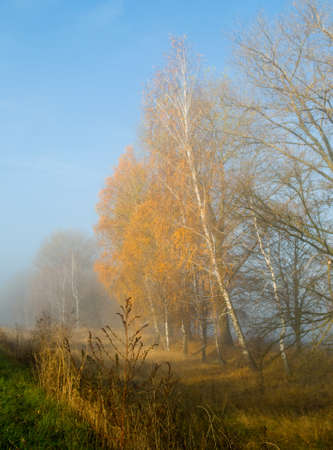 Sun-drenched meadow and misty gold trees - it is majestic autumn morning.