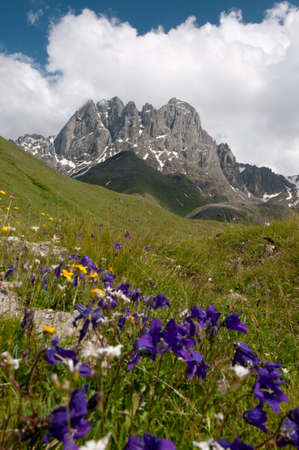 This is a summer in the high mountains. Chaukhi mountain group - Caucasus Mountains, Georgia is in the background, bright violet flowers are in the foreground. Stock Photo