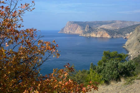 decorates: Bright autumn tree decorates Crimea seascape.