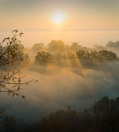 penetrate: Sunbeams penetrate morning fog, autumn trees are in the foreground. This is a sunrise near the river.