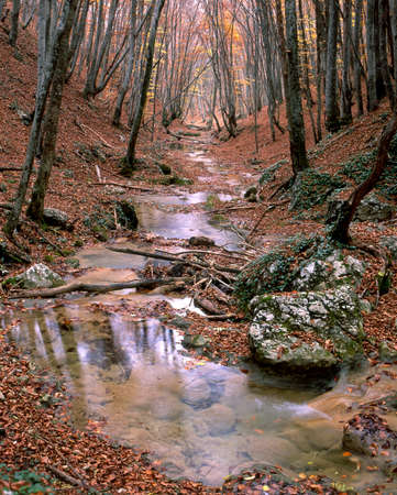repose: The end of autumn. Ground and stream covered with fallen leaves. The last yellow leaves repose on trees.