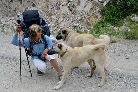 meets: Woman with backpack meets with two young Caucasian mountain or Shepherd dogs. Cattlemen are used such animals in mountains as listening dog.