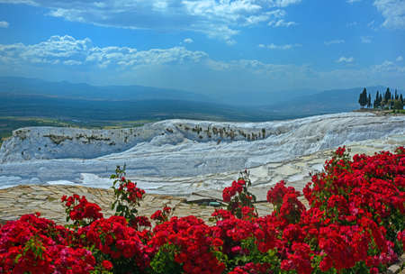 rosas rojas: White Pamukkale travertines and bright red roses in foreground. Foto de archivo