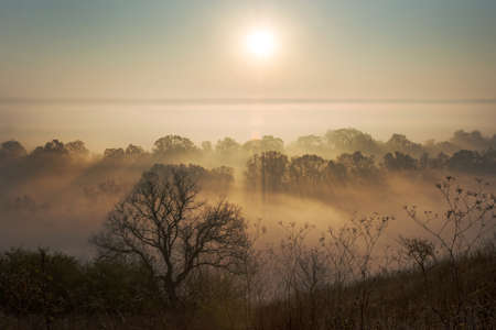 penetrate: Beautiful morning - sunbeams penetrate fog covered trees. Tree silhouette inforeground. Stock Photo