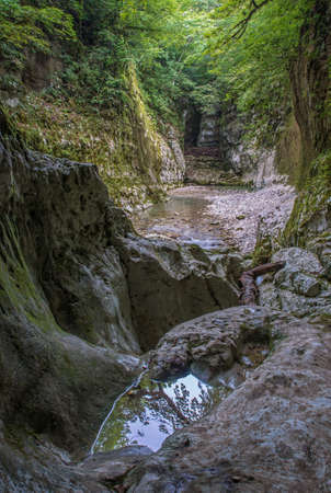 canyon walls: Scene in deep canyon. Canyon walls are covered with green moss. Green trees tops trap sunlight. Little pool of water with reflection in foreground.