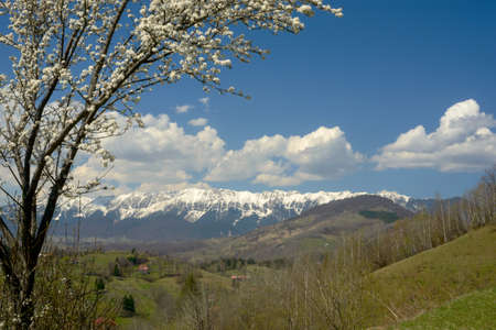 transylvania: Springtime in Transylvania Alps. Landscape with blossom tree in foreground.