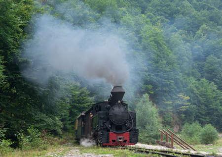 woodburning: Running wood-burning locomotive of Mocanita (Maramures, Romania). Old train is situated against green trees background.