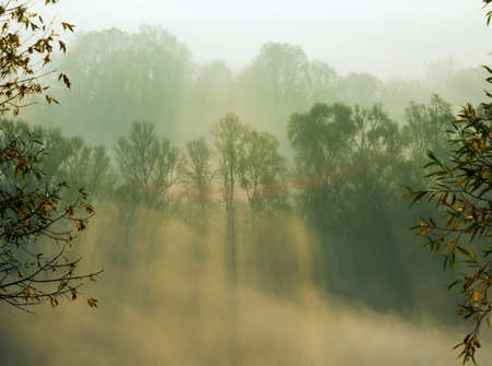 penetrate: Autumn trees smothered in morning fog. Sunbeams penetrate mist.