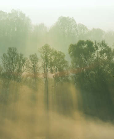 smothered: Autumn trees are  smothered in morning fog. Sunbeams penetrate mist.