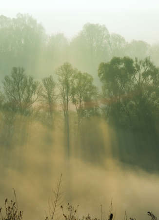 smothered: Autumn trees are  smothered in morning fog. Sunbeams penetrates mist. Stock Photo
