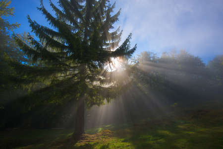 penetrate: Morning time. First sunbeams penetrate mist and illuminate forest meadow. Blue sky in background. Stock Photo