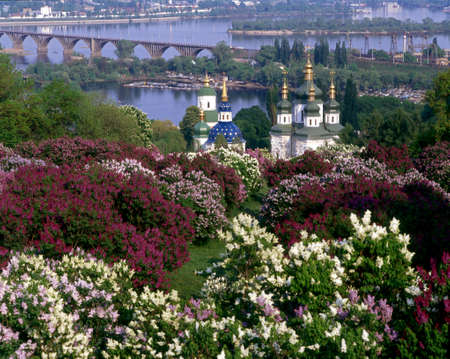 Lilac blossom in Kiev Botanical garden. Vydubychi Monastery is in the middle of composition.