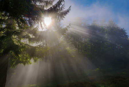Morning time. Sun rays penetrate mist in forest. Blue sky in background.
