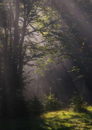 Sunbeams penetrate mist and illuminate forest meadow.