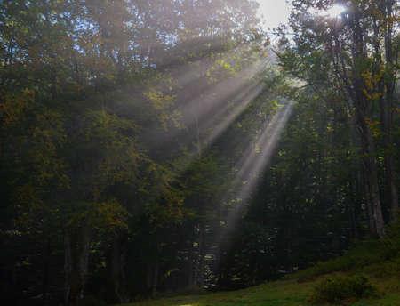 Autumn forest. Sunbeams penetrate morning fog. Stock Photo
