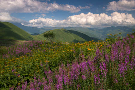 Mountains. Alpine meadows. Beautiful clouds.