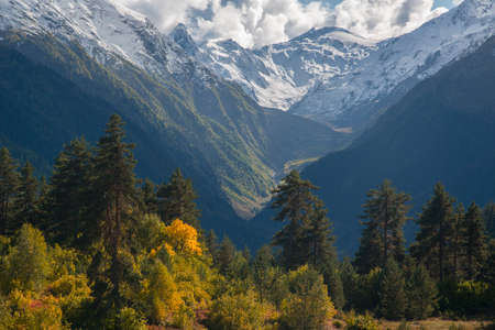 Autumn in high mountains. Yellow trees in foreground and snow covered mountains in background.