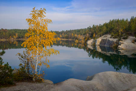 Yellow birch near a mirror-smooth lake. Blue sky with clouds reflects in water.